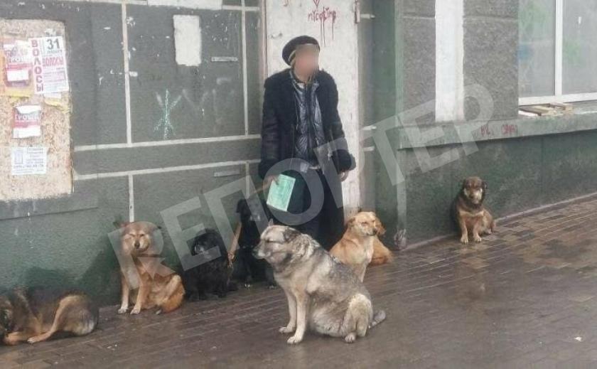 В Каменском бездомную «даму» лишают собачек, кусающих прохожих
