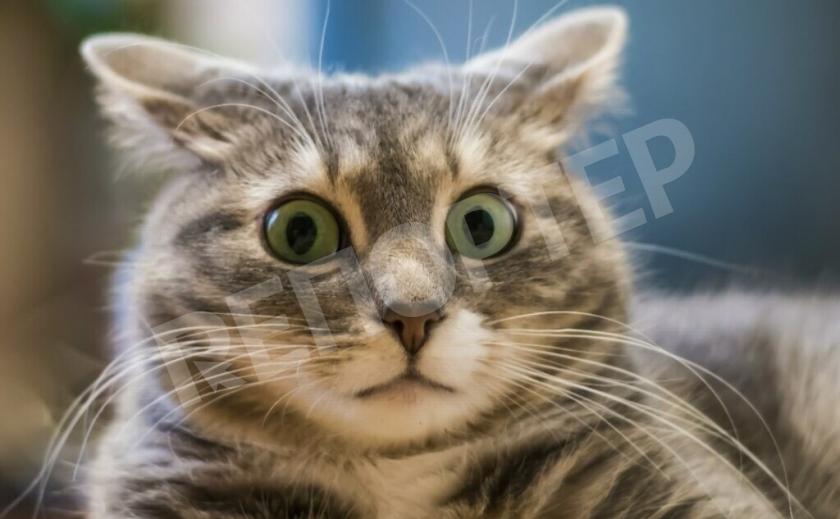 Каменской кот снова провоцирует создание ГСЧСК