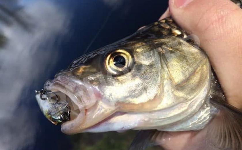 КУДА ПОЕХАТЬ НА РЫБАЛКУ: Рыбные места под Петриковкой, Царичанкой и Магдалиновкой