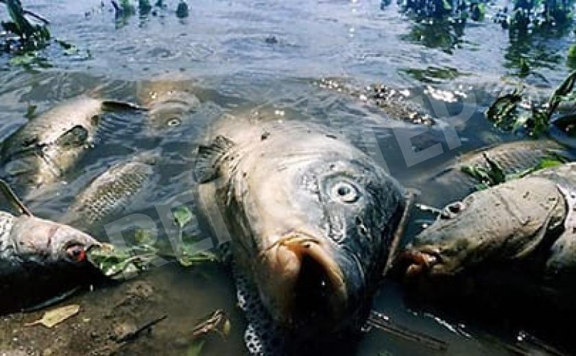 Кто будет отвечать за массовую гибель рыбы в Приднепровье?