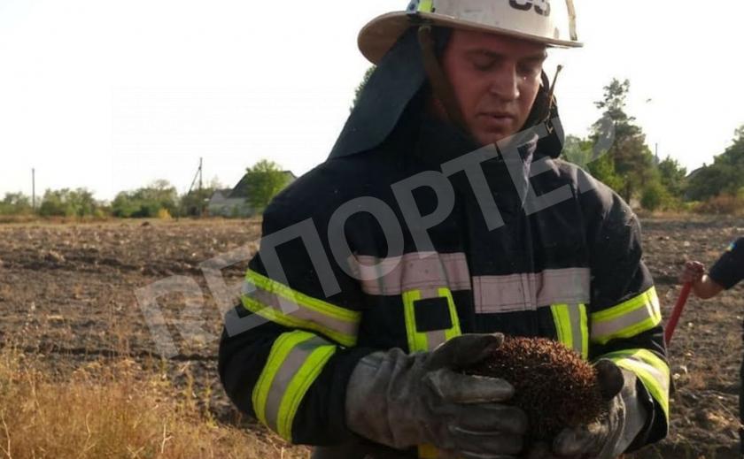 Вблизи Каменского от разбушевавшегося огня спасли ежика